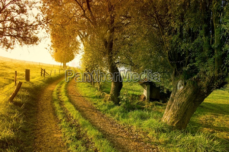 pathway, at, sunrise - 476706