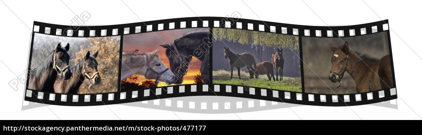 filmstrip - 477177