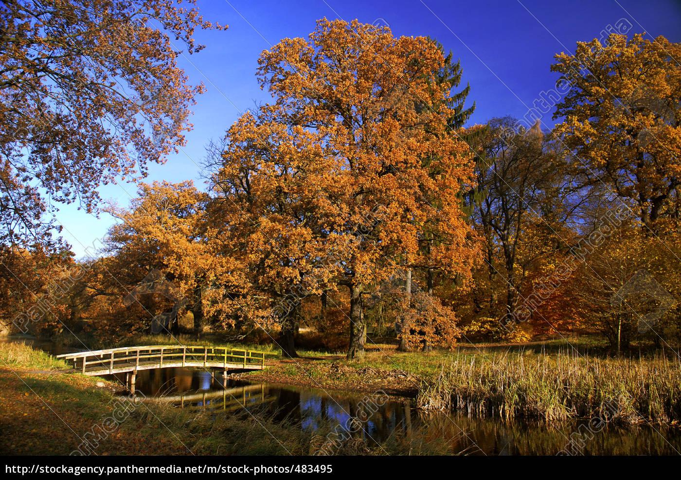 autumn, forest - 483495