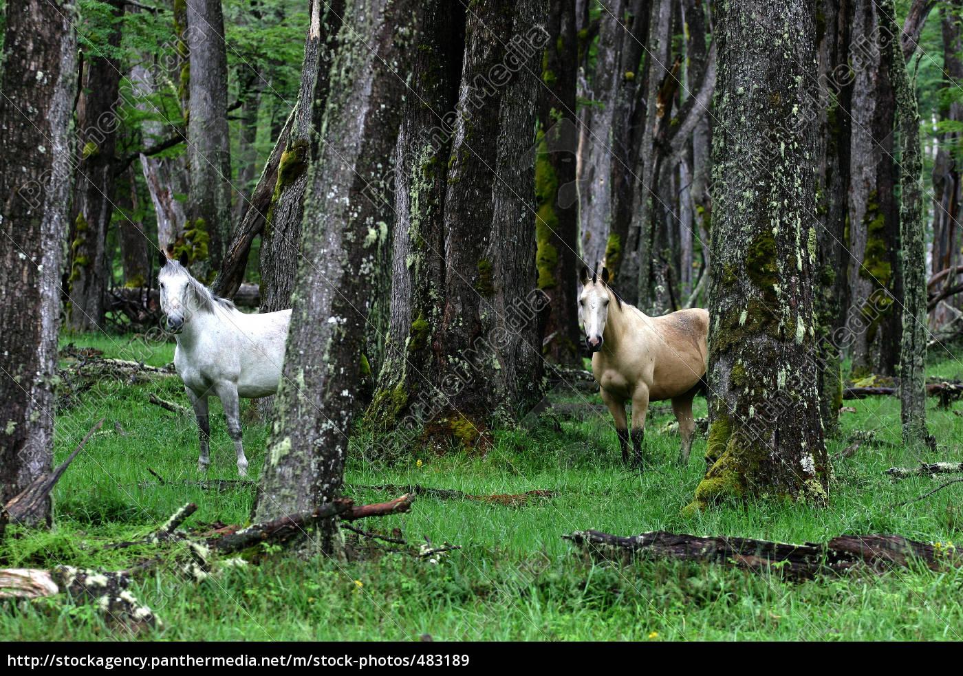 horses, in, patagonia - 483189
