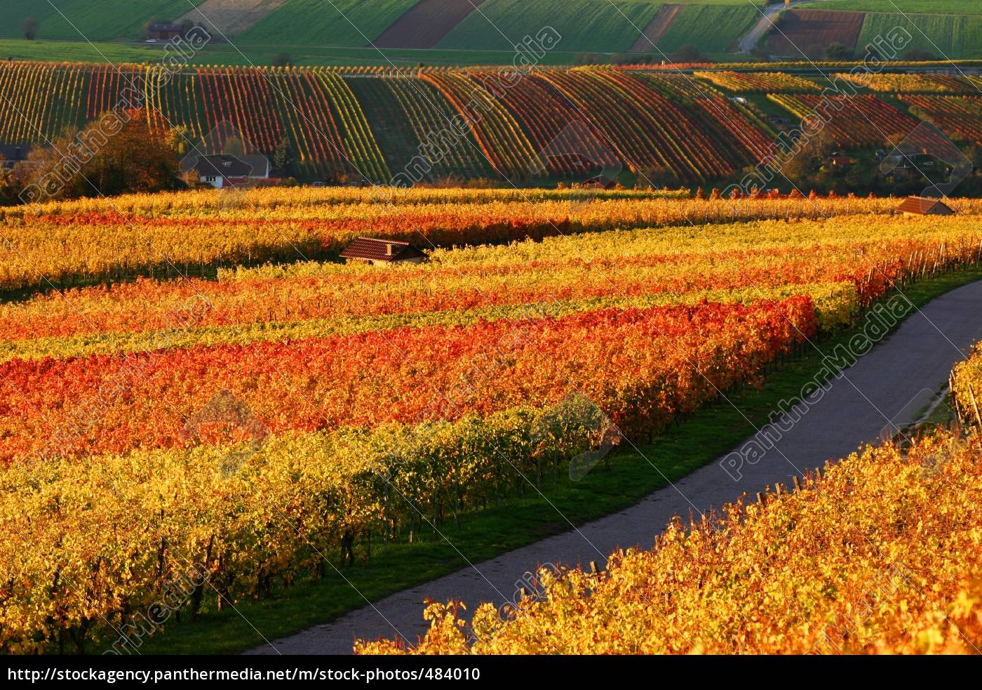 vineyards - 484010