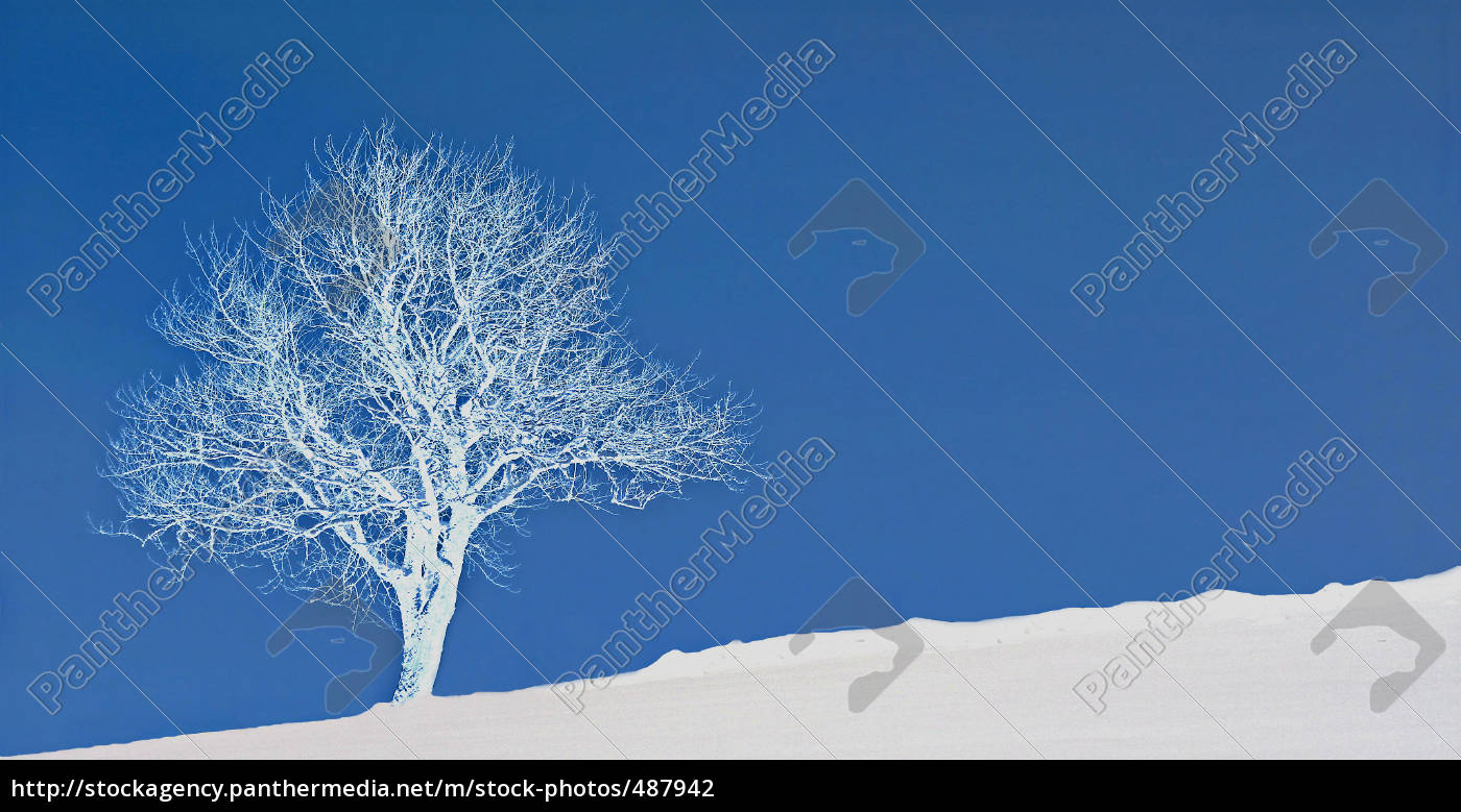wintertree - 487942