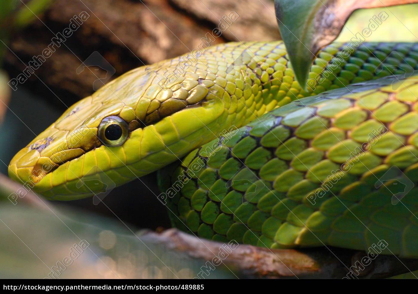 snake - 489885