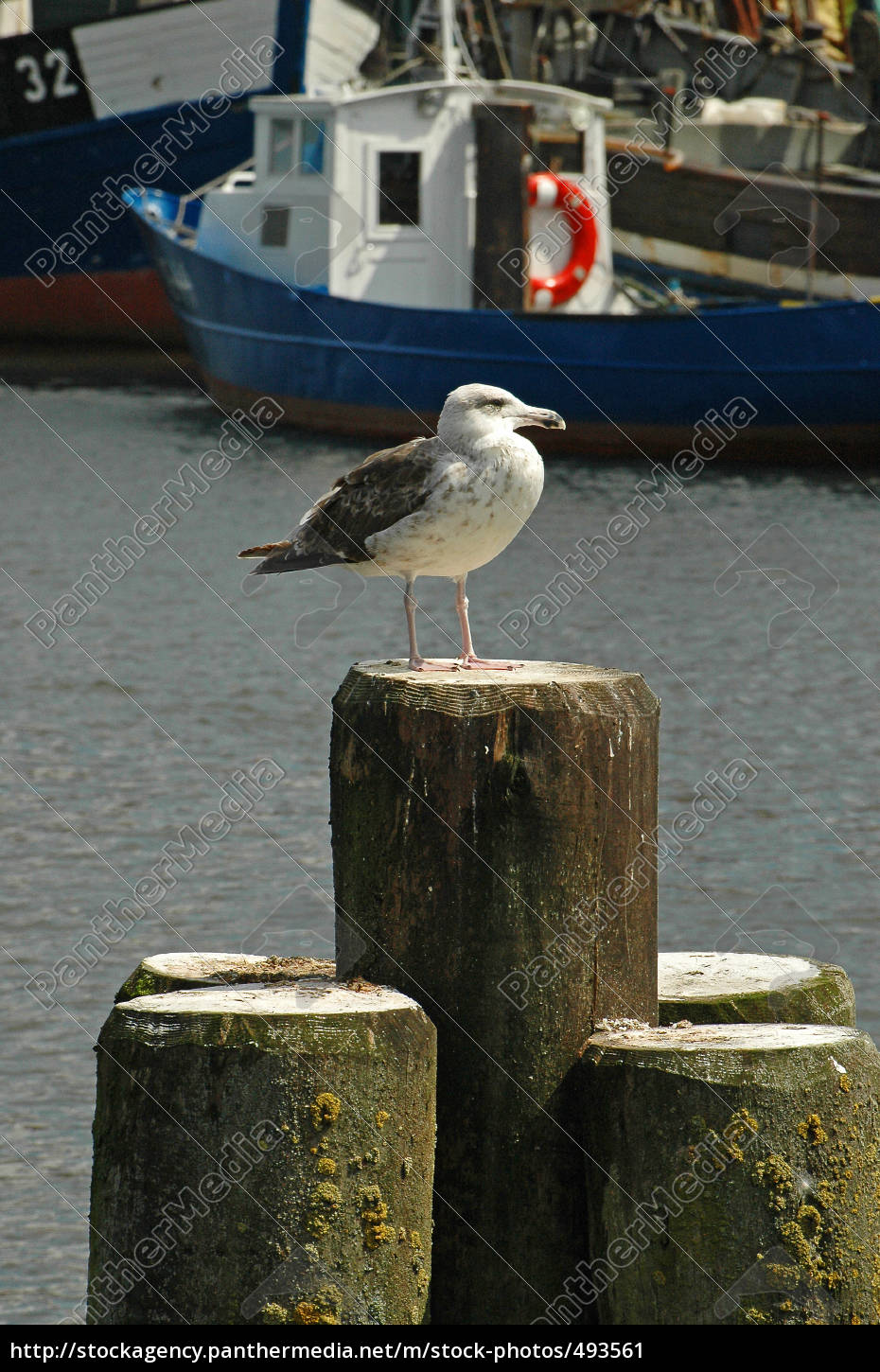 seagull, in, the, harbor - 493561
