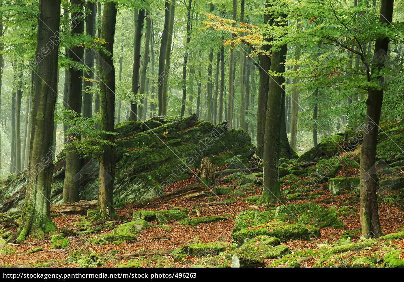 forest - 496263
