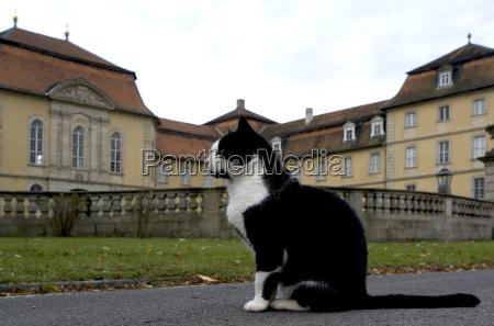 our castle cat
