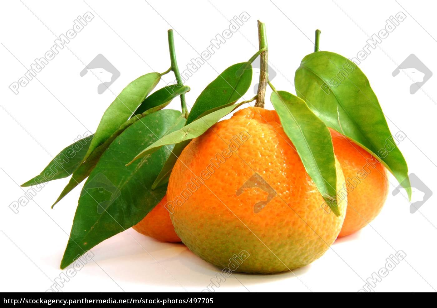 fresh, clementine - 497705