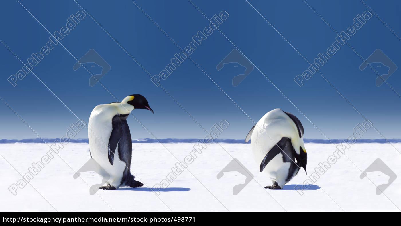 penguin, sport - 498771