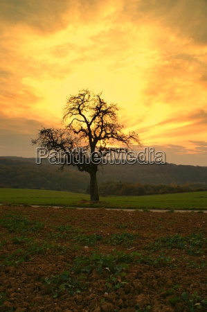 tree, in, the, evening - 500151