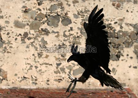 is a bird flying