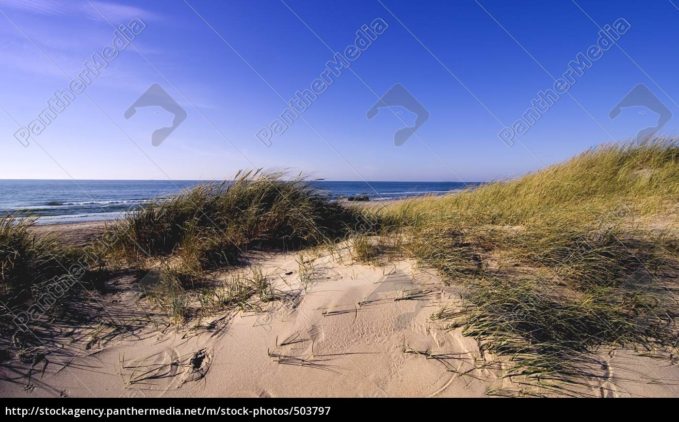 traces, in, the, sand - 503797
