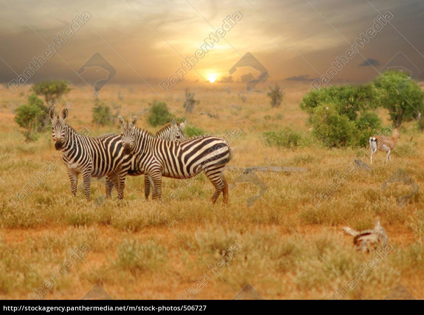 wildlife - 506727