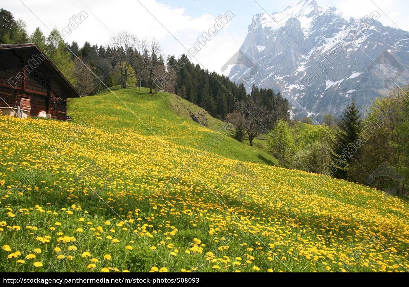 alpine, meadow - 508093