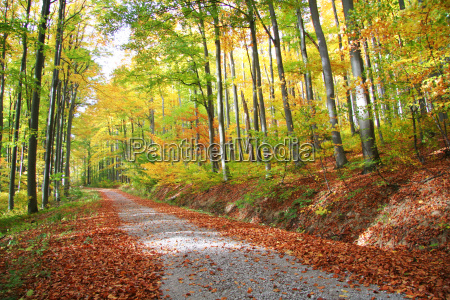 autumnal forest road no 1
