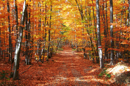 autumnal forest road no 3