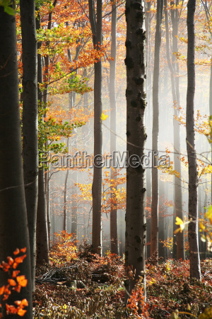 misty, forest, no., 2 - 512725