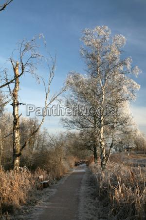 winter walk in schwenninger moos 2