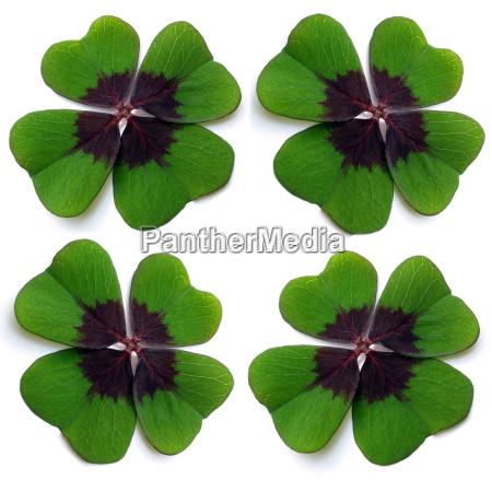 4, leaf, clovers - 514996