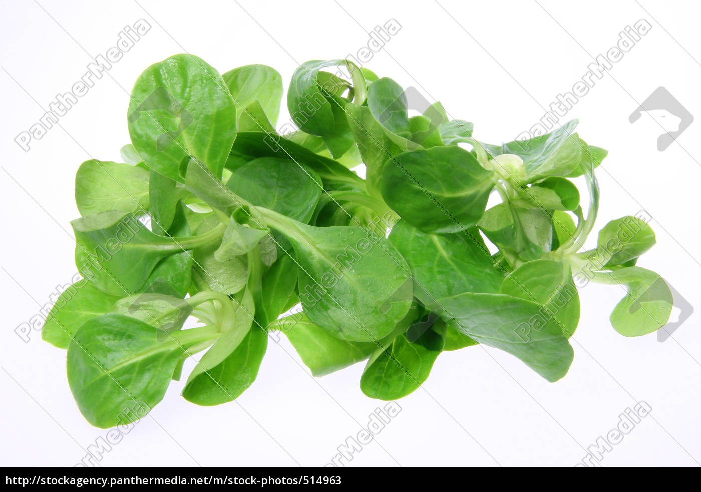 lamb's, lettuce - 514963