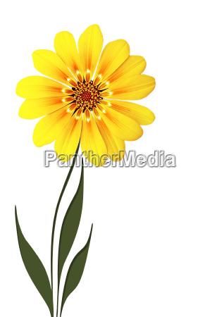 flowers - 519001