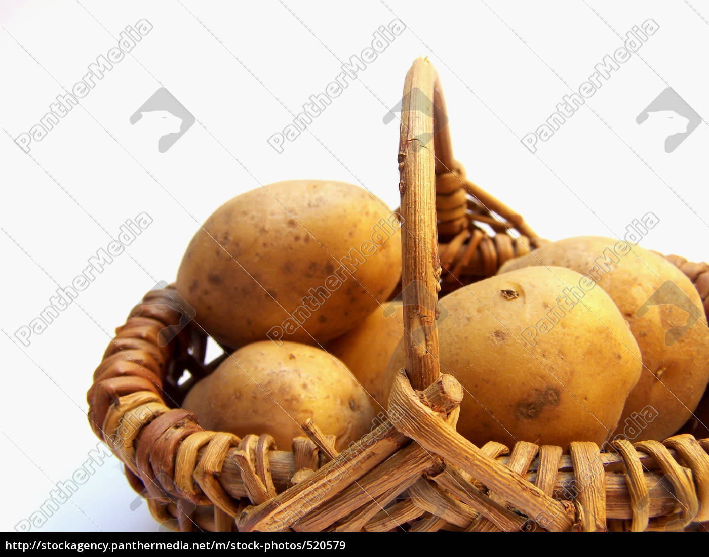 potato, harvest - 520579