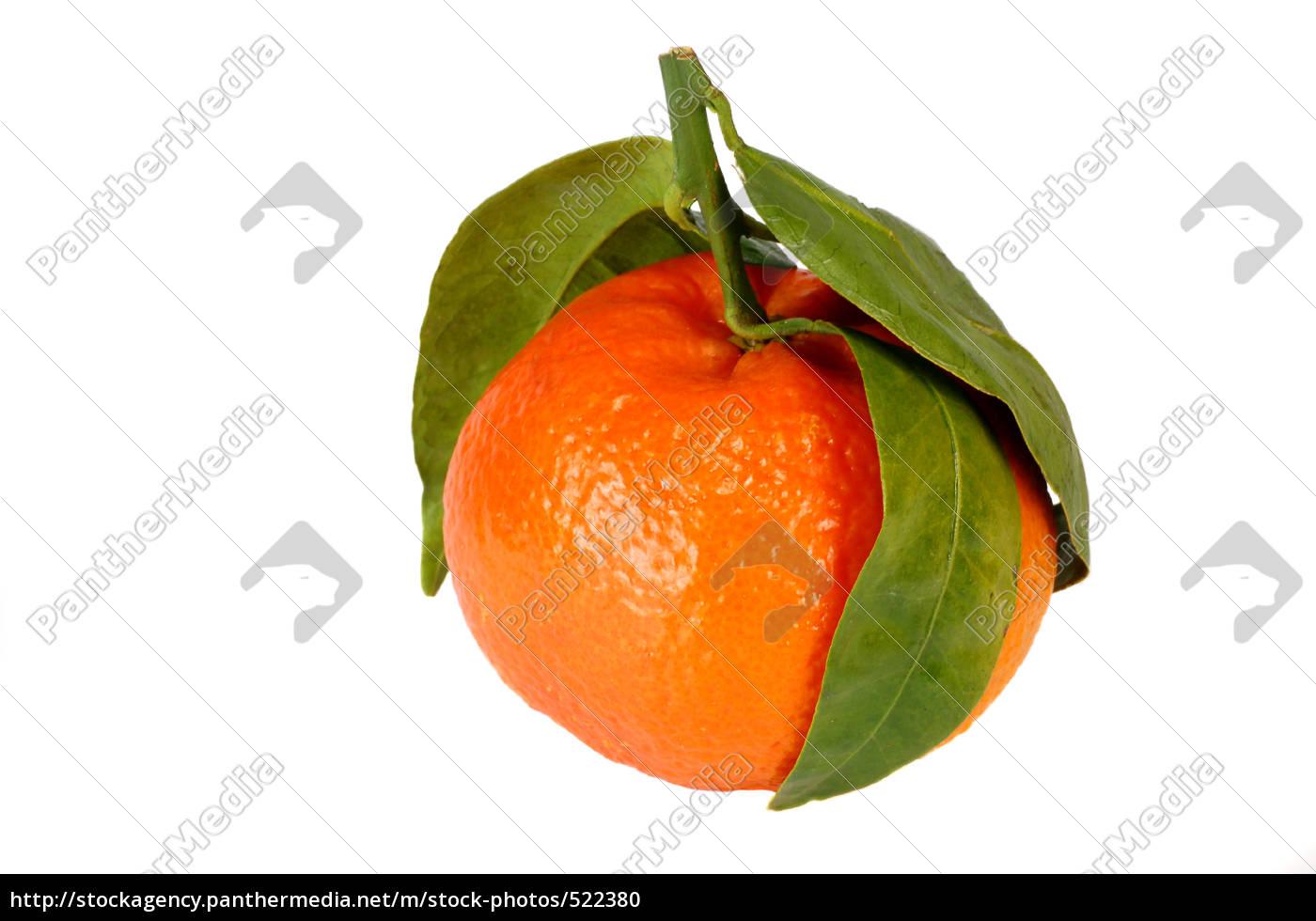 clementine - 522380