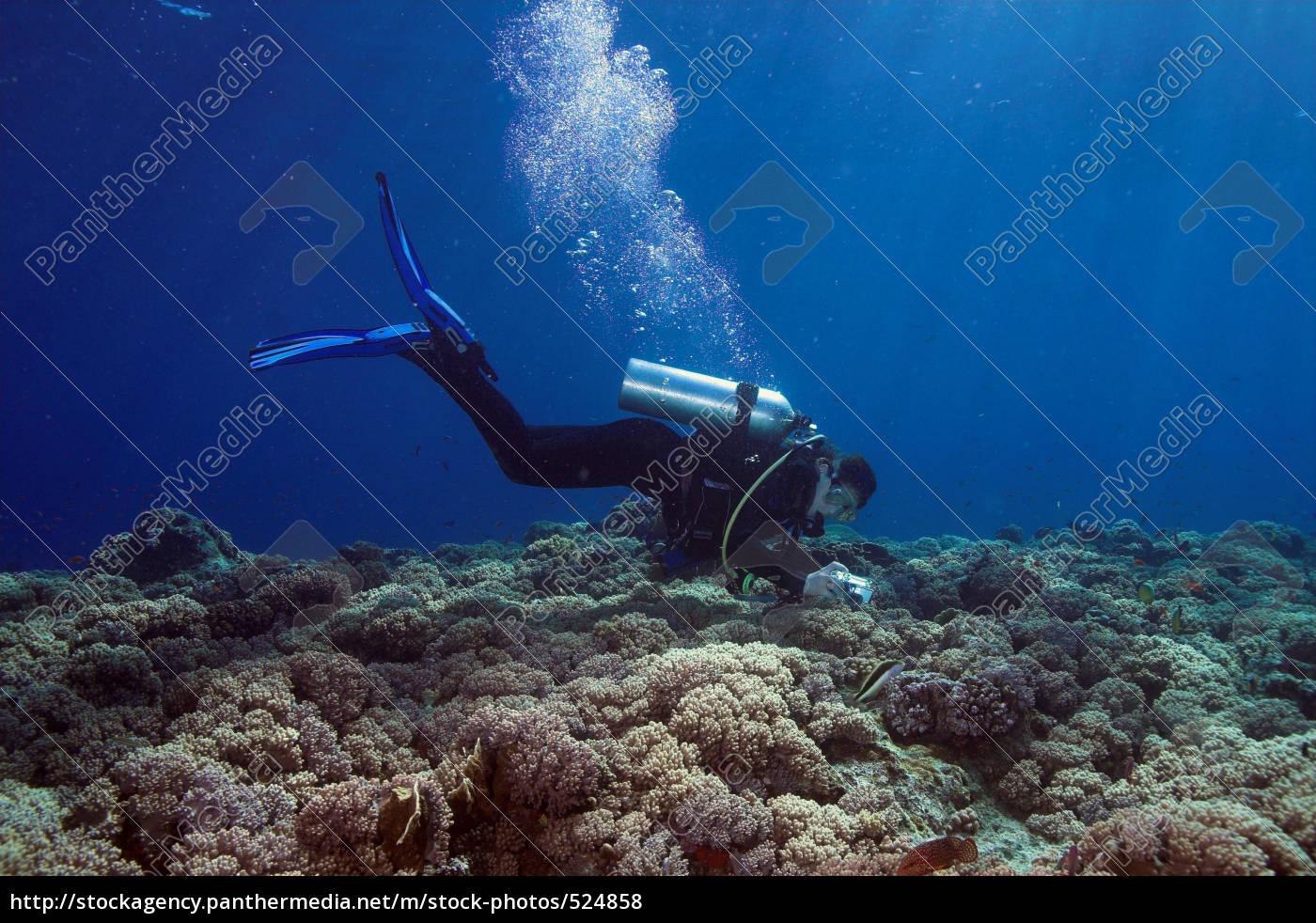 underwater, photography - 524858