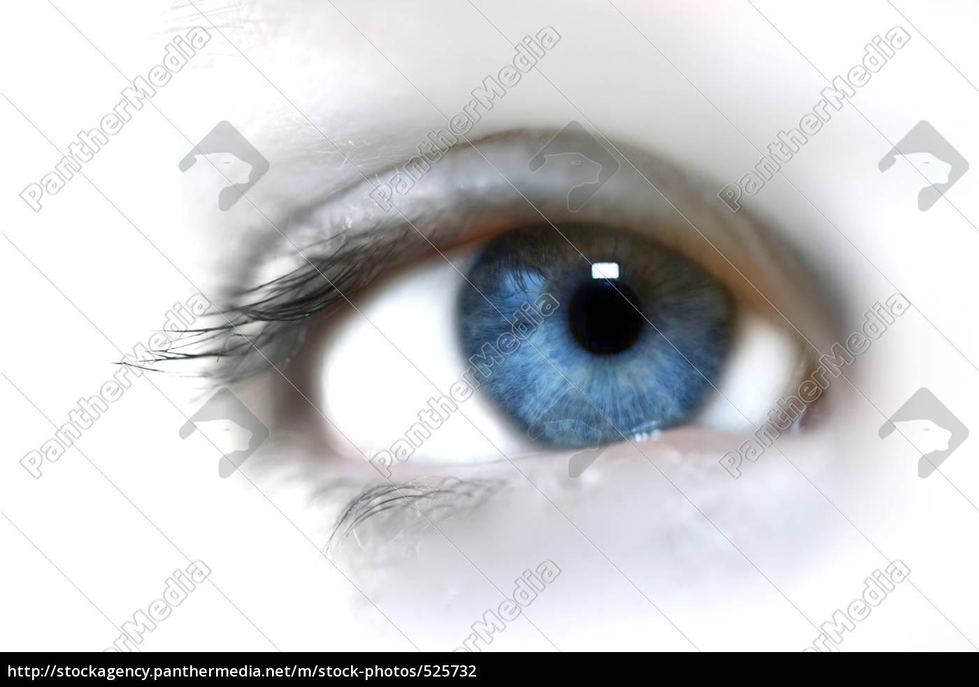 eye - 525732