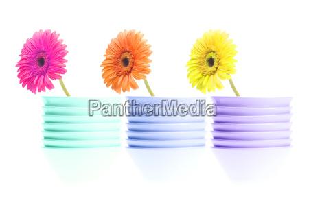 3, flowers - 526117