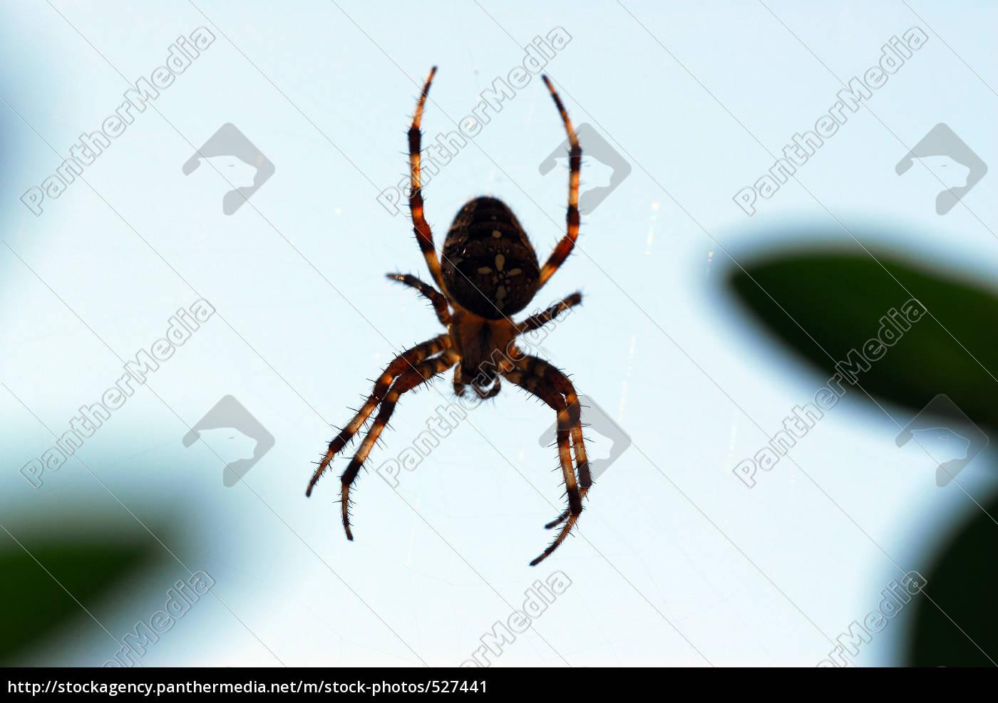garden, spider, against, the, light - 527441