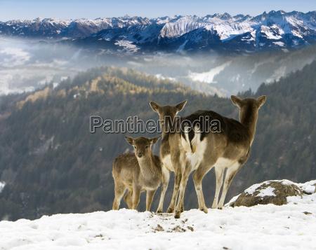 wildlife - 531908