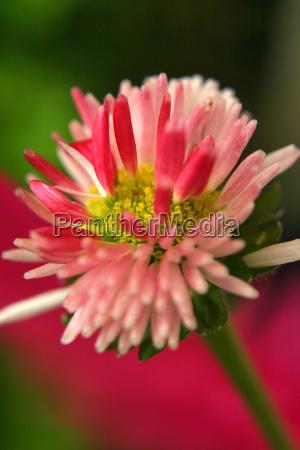blossom - 533646