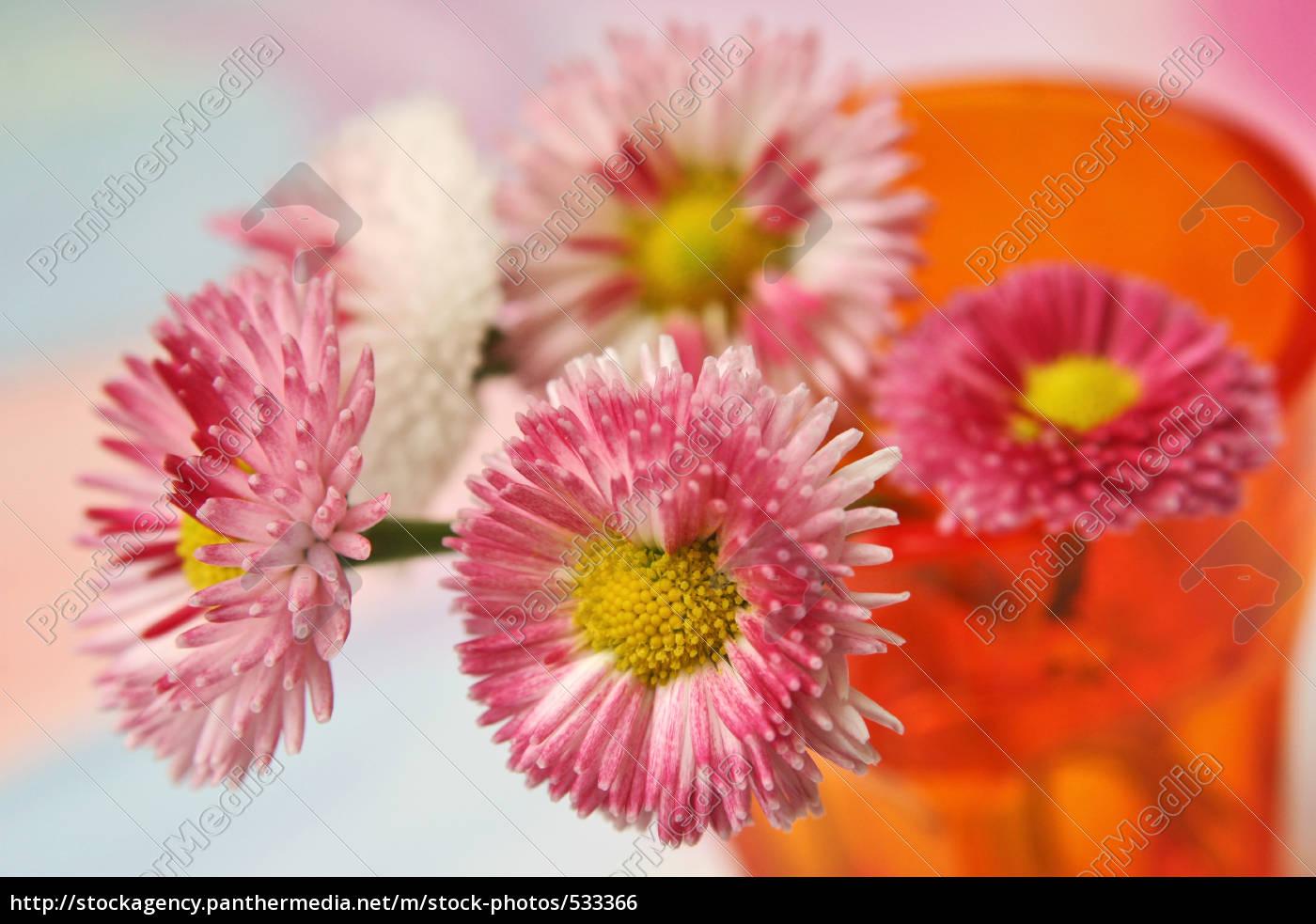 floral, still, life - 533366