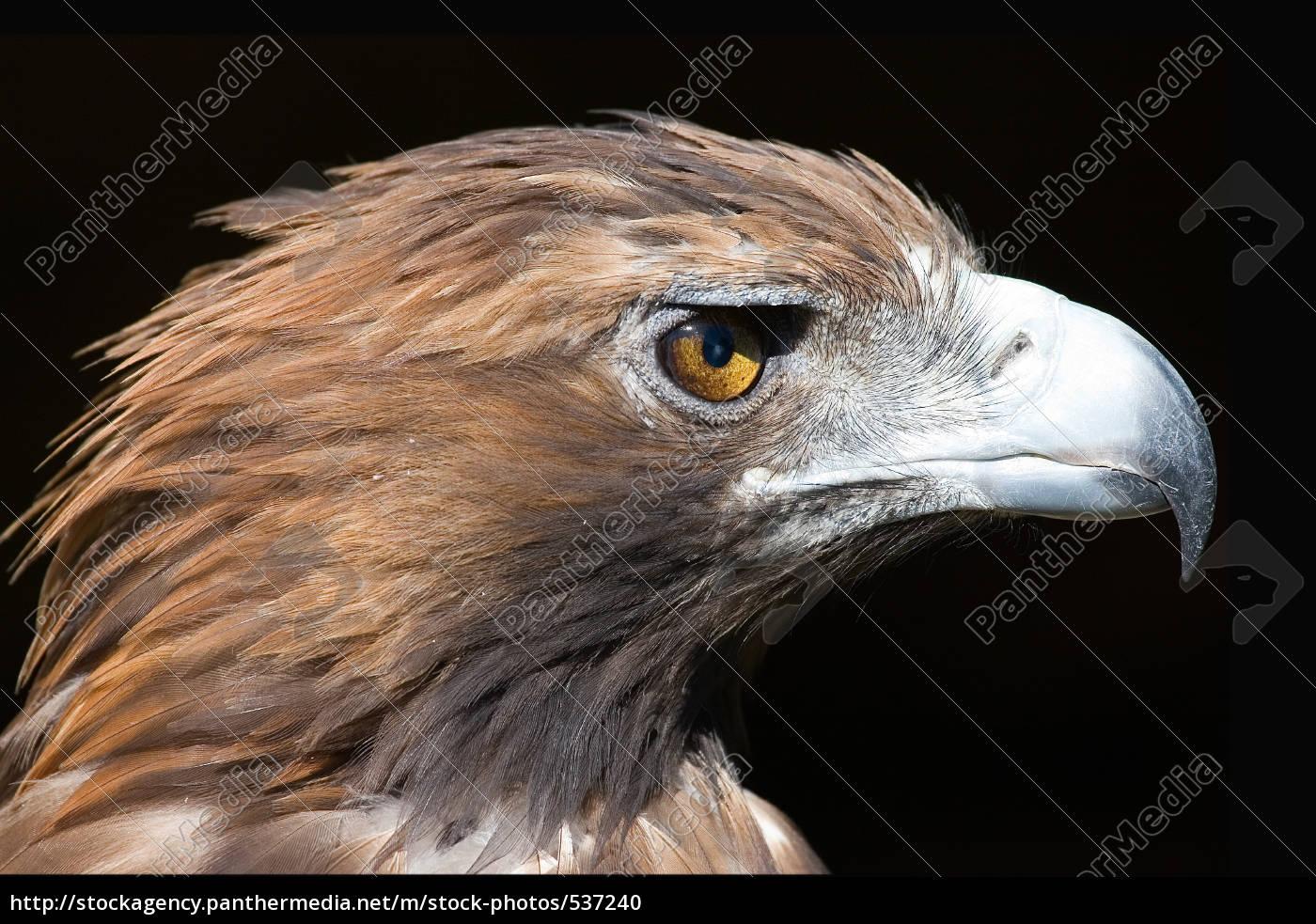 eagle's, eye - 537240