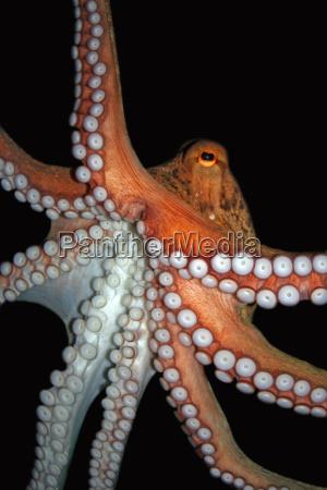 octopus - 537649