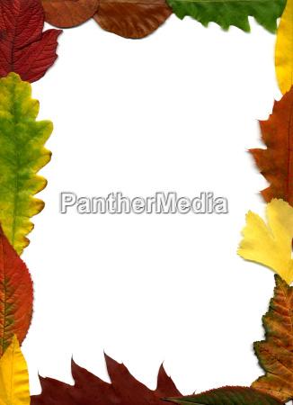 leaves, frame - 540285