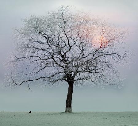 a, tree - 544520
