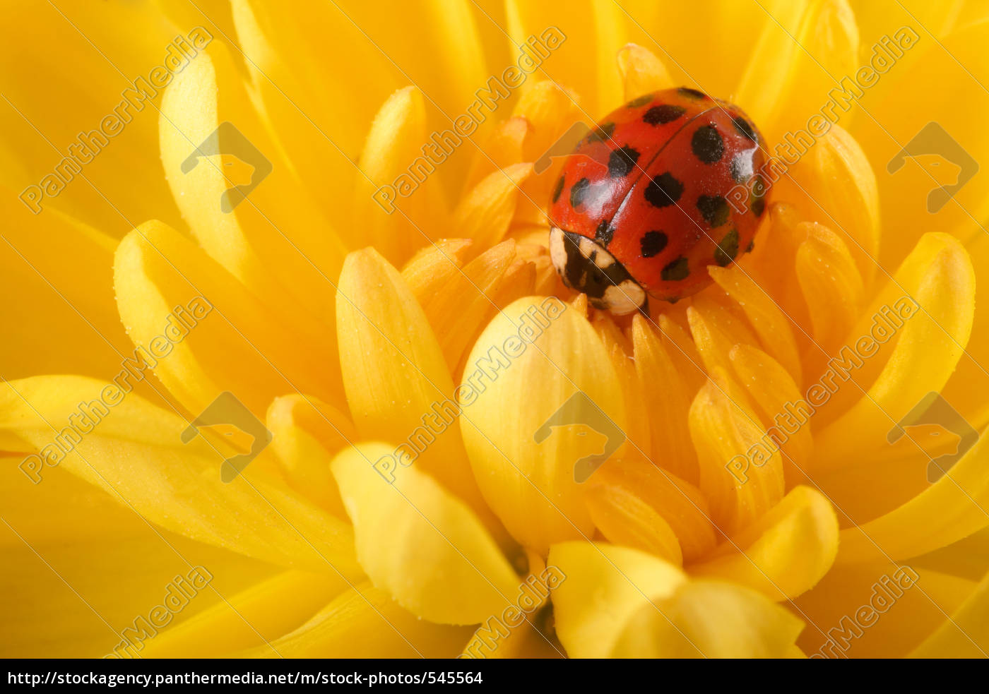 ladybug - 545564