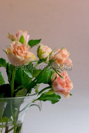 rosenstrauss - 547754