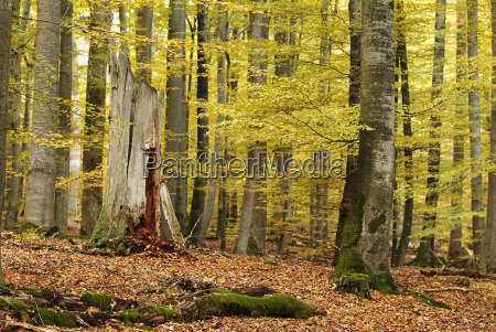 forest, in, autumn - 548724
