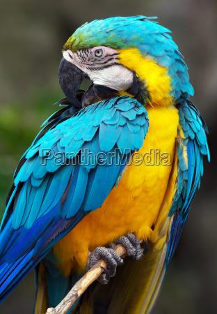 parrot - 549060