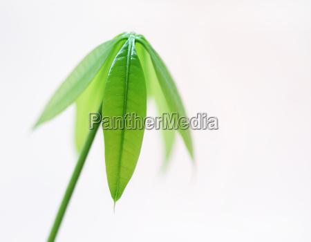 leaf werk