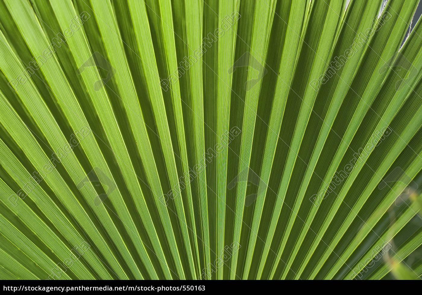fan, palm - 550163