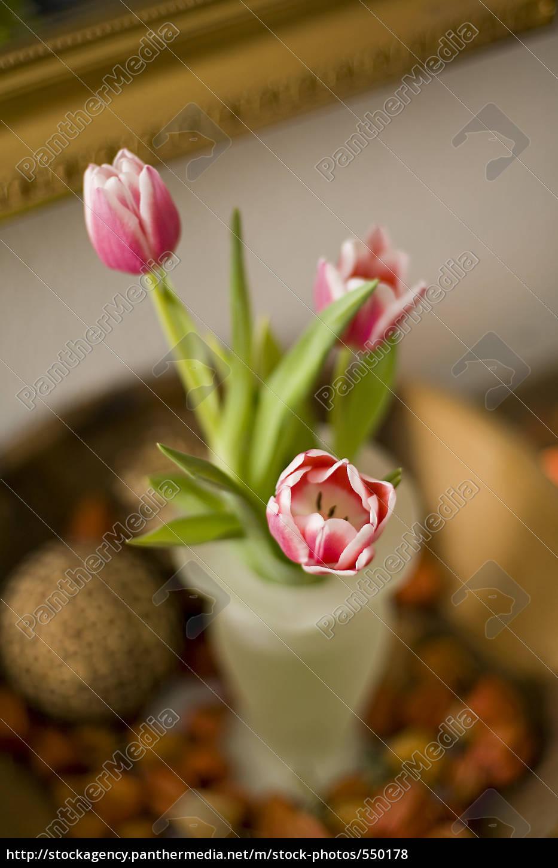 tulip - 550178