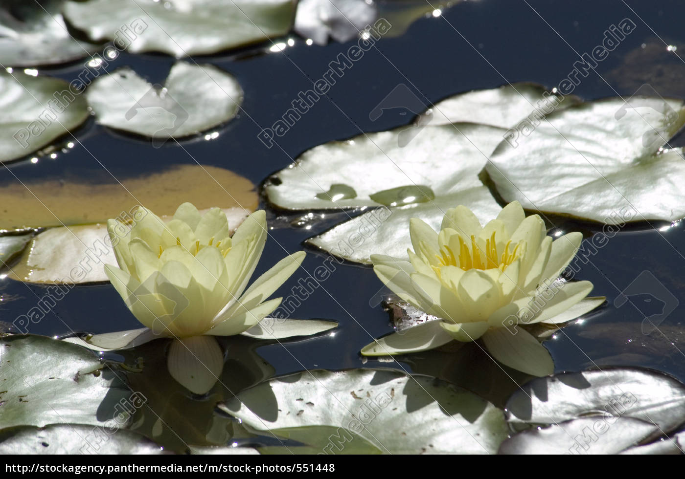 water, lilies - 551448