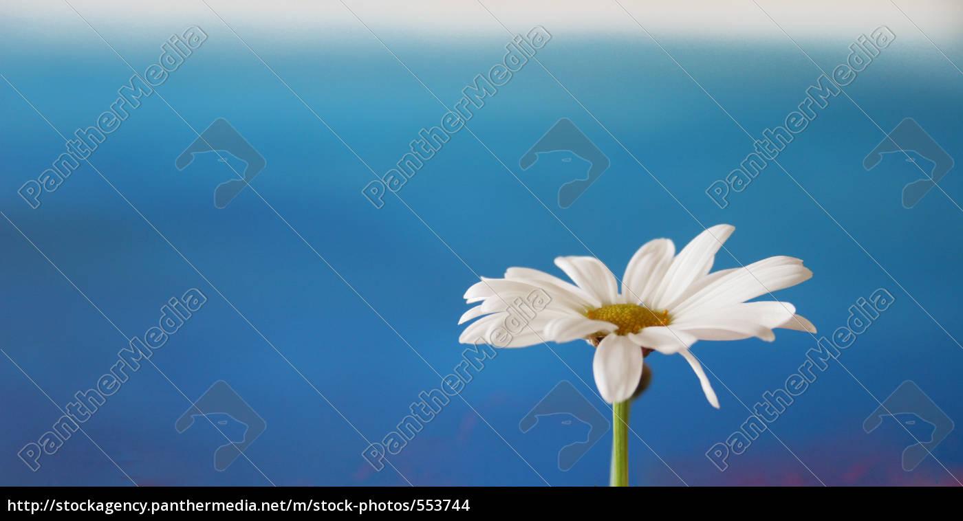 daisies, spring - 553744