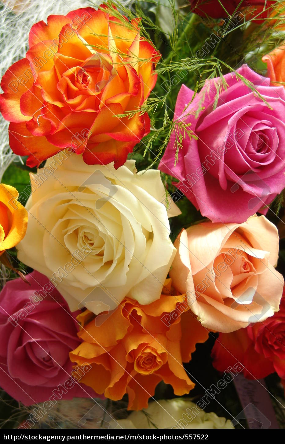 a, colorful, bouquet, of, roses - 557522