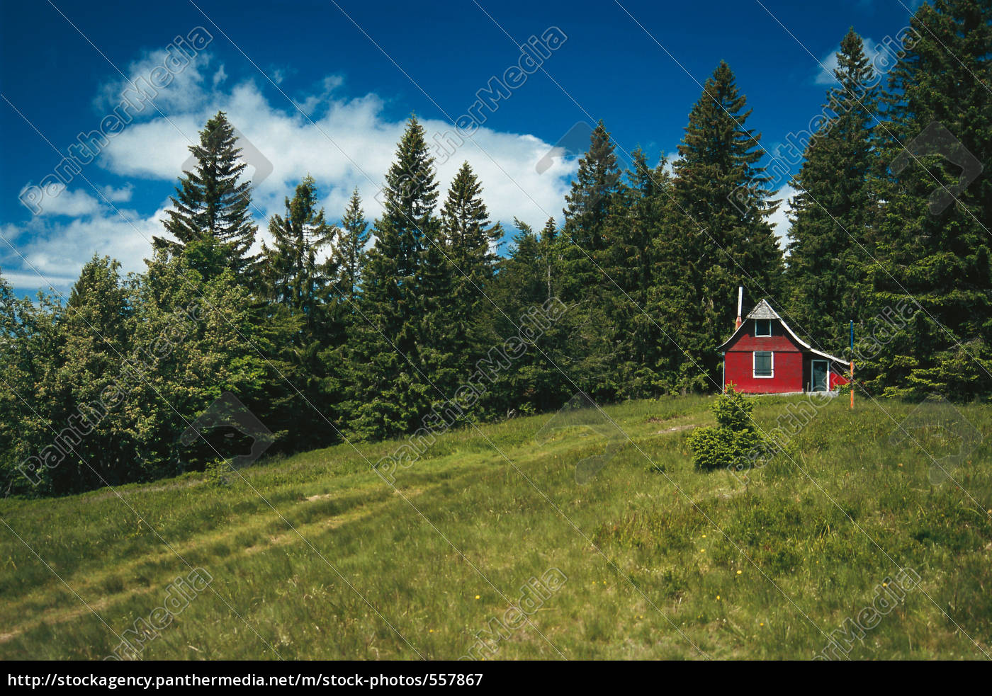 cottage, at, the, forest - 557867
