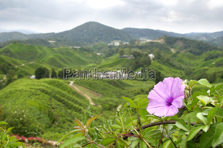pink, flower, against, town, and, countryside - 559724