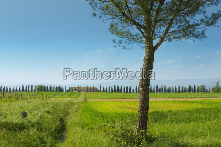 landscape, in, tuscany - 560649
